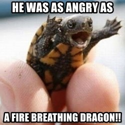angry turtle - he was as angry as a fire breathing dragon!!