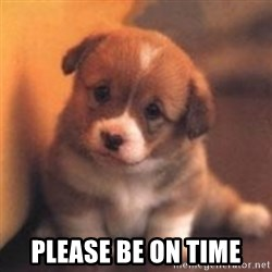 cute puppy - Please be on time