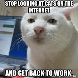 Serious Cat - Stop looking at cats on the internet and get back to work.