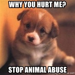 cute puppy - Why You Hurt Me?  STOP Animal ABUSE