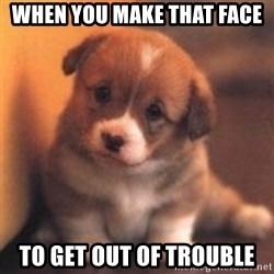 cute puppy - when you make that face to get out of trouble