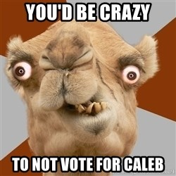 Crazy Camel lol - you'd be crazy to not vote for caleb