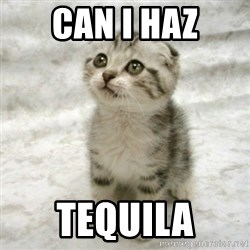 Can haz cat - can i haz tequila