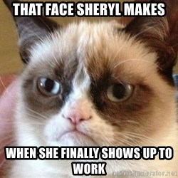 Angry Cat Meme - that face sheryl makes when she finally shows up to work
