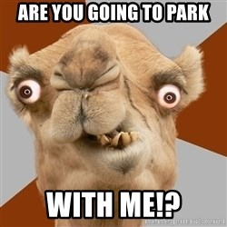 Crazy Camel lol - are you going to park with me!?