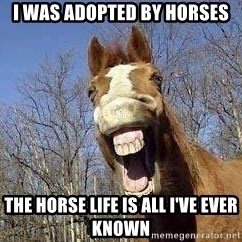 Horse - I was adopted by horses The horse life is all I've ever known
