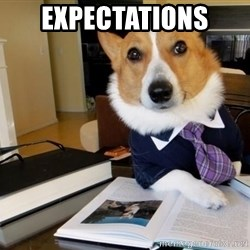 Dog Lawyer - expectations