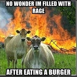 Evil Cows - no wonder im filled with rage after eating a burger