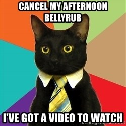 Business Cat - Cancel my afternoon bellyrub I've got a video to watch