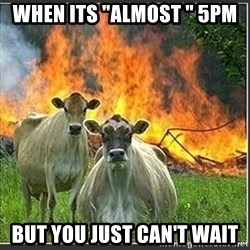"Evil Cows - When its ""almost "" 5pm But you just can't wait"