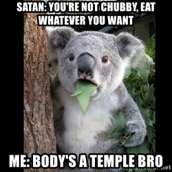 Koala can't believe it - Satan: You're not chubby, eat whatever you want  Me: body's a temple brO