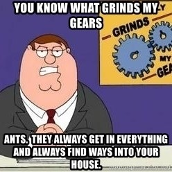Grinds My Gears Peter Griffin - you know what grinds my gears ants.  they always get in everything and always find ways into your house.