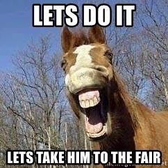 Horse - Lets do it Lets take him to the fair