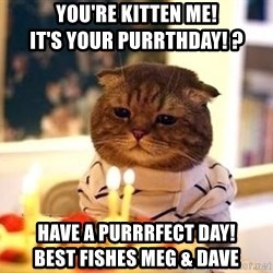 Birthday Cat - You're kitten me!                          It's your purrthday! ? Have a purrrfect day!                  Best fishes Meg & Dave