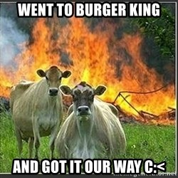Evil Cows - went to burger king and got it our way c:<