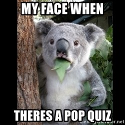 Koala can't believe it - my face when theres a pop quiz