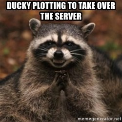 evil raccoon - ducky plotting to take over the server