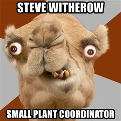 Crazy Camel lol - Steve witherow Small plant coordinator