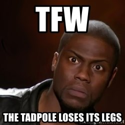kevin hart nigga - TFW The Tadpole loses its legs