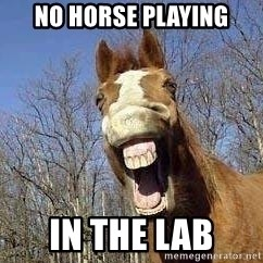 Horse - no horse playing in the lab