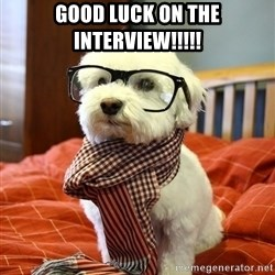 hipster dog - good luck on the interview!!!!!
