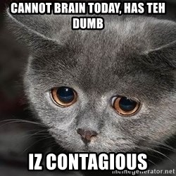 Sadcat - Cannot brain today, has teh dumb IZ contagious
