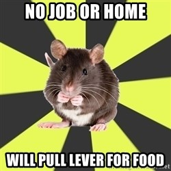 Survivor Rat - No Job or home Will pull lever for food