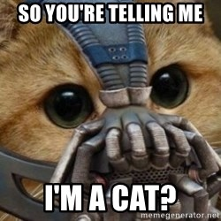 bane cat - so you're telling me I'm a cat?
