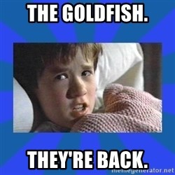 i see dead people - The goldfish. They're back.