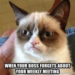 Grumpy Cat  - when your boss forgets about your weekly meeting