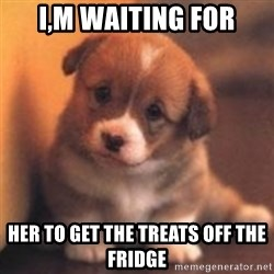 cute puppy - i,m waiting for her to get the treats off the fridge