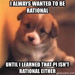 cute puppy - I always wanted to be rational Until I learned that Pi ISn'T RATIONAL EITHER