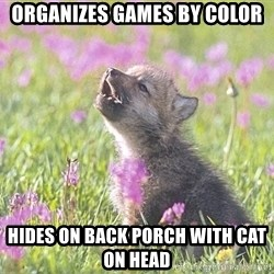 Baby Insanity Wolf - Organizes games by color Hides on back porch with cat on head