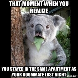 Koala can't believe it - That moment when YOu realize You stayed in the same apartment as YOUR ROOMMATE last night