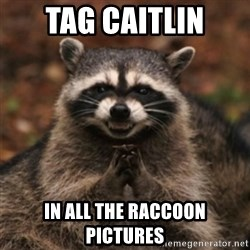 evil raccoon - Tag Caitlin In All the raccoon pictures