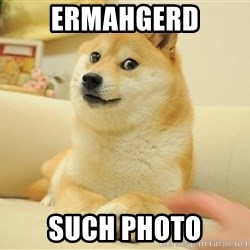 so doge - ermahgerd Such photo