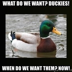 good advice duck - what do we want? duckies! when do we want them? now!