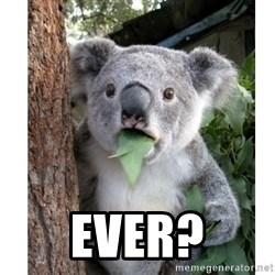 surprised koala - Ever?