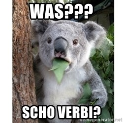surprised koala - was??? scho verbi?