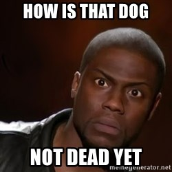 kevin hart nigga - How is that dog not dead yet