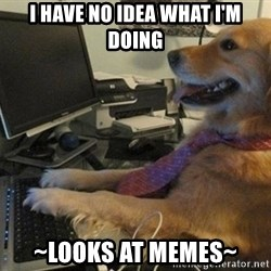 I have no idea what I'm doing - Dog with Tie - I have no idea what i'm doing ~looks at memes~