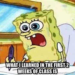 Spongebob What I Learned In Boating School Is - What i learned in the first 2 weeks of class is