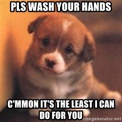 cute puppy - pls wash your hands C'mmon it's the least i can do for you