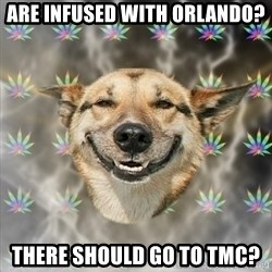Stoner Dog - Are infused with orlando? There should go to tmc?