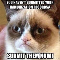 Angry Cat Meme - you haven't submitted your immunization records? submit them now!