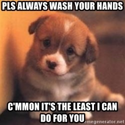 cute puppy - pls always wash your hands  c'mmon it's the least i can do for you