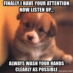 cute puppy - finally i have your attention now listen up... always wash your hands clearly as possible