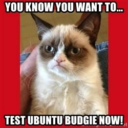 No cat - you know you want to... test Ubuntu Budgie now!