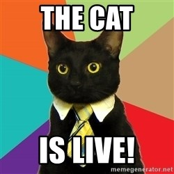 Business Cat - The CAT IS LIVE!