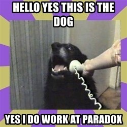 Yes, this is dog! - Hello yes this is the dog  Yes I Do work at parAdox